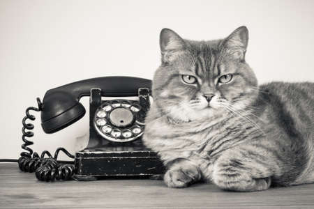 landline: Vintage telephone and cat on table sepia photo