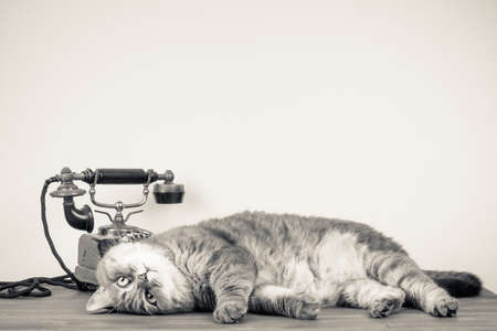 Vintage telephone and cat on table old style sepia photo photo