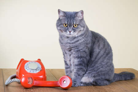Retro roterende telefoon en grote kat op tafel