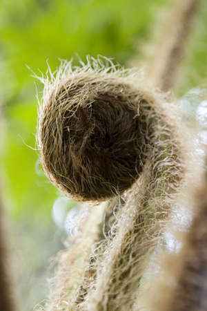 bourgeon: Macro shot of fuzzy and curled up plants bud