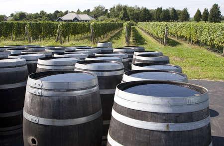 Wine barrels at the vineyard Фото со стока