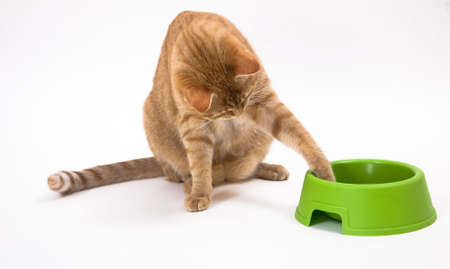 paw smart: Young orange tabby house cat with its paw in the green pet as if trying to move it closer. Isolated against white background