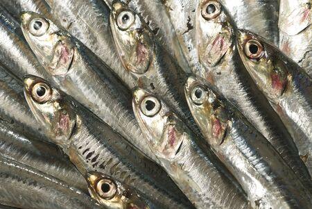 sardinas: sardinas Foto de archivo