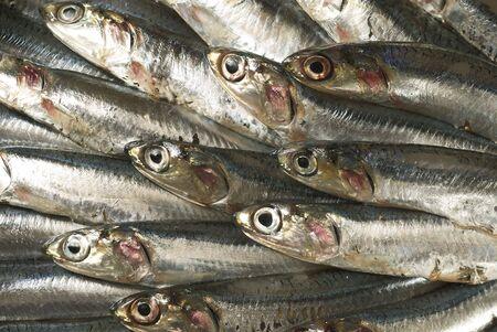 sardines Stock Photo - 3781198