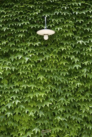 wall of leaves photo