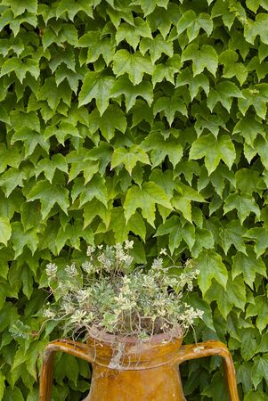 wall of leaves Stock Photo - 5648366