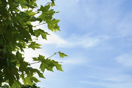Plane-tree leaves Stock Photo - 5648354