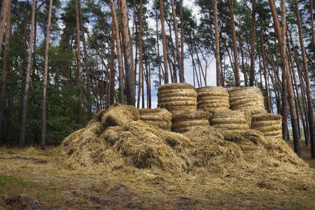 rebelling: Hay bales at the forest after harvest. Hay for the winter.