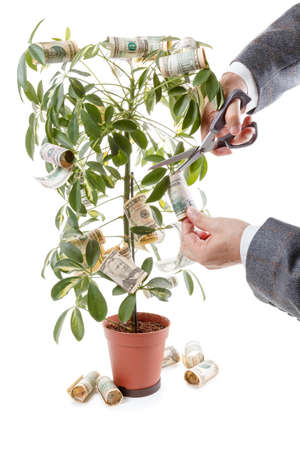 harvests: Money Tree and hands of men. - symbol of financial success, harvests investment profits