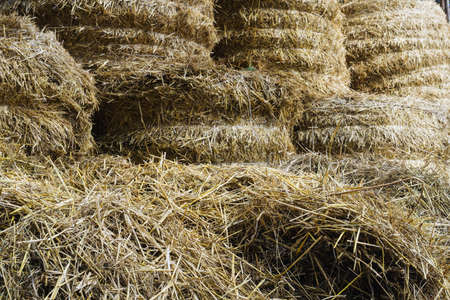rebelling: hay and straw procured for cattle in winter