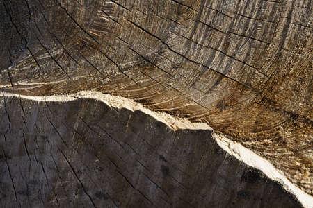 heartwood: heartwood texture background, cut down a tree Stock Photo