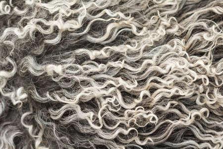 gray pattern: Soft, and fluffy sheepskin - wool. Closeup background