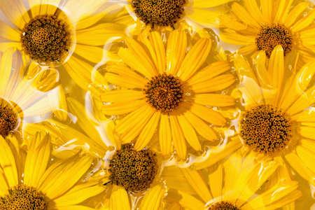 marguerite: fleur marguerite jaune, fond des fleurs sous l'eau Banque d'images