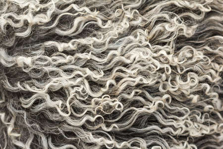 sheepskin: Soft, and fluffy sheepskin - wool. Closeup background