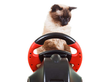 deadpan: Cat playing a video game console steering wheel with deadpan expression on his face fluffy, isolated on white