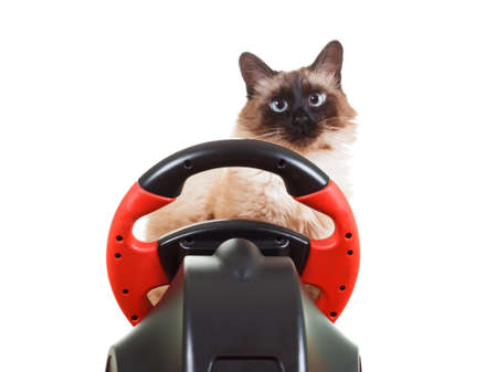 deadpan: Cute Cat playing a video game console steering wheel with deadpan expression on his face fluffy, isolated on white