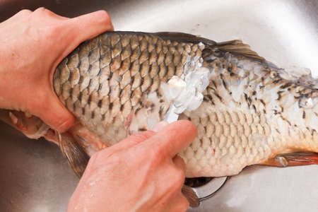 animal blood: Gutting of freshly caught fish carp, washing sink, cleaning scales