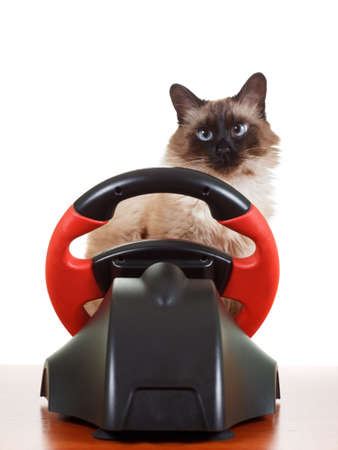 deadpan: Nice Cat playing a video game console steering wheel with deadpan expression on his face fluffy, isolated on white