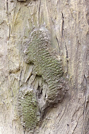 bark carving: Old tree trunk detail texture as natural background.