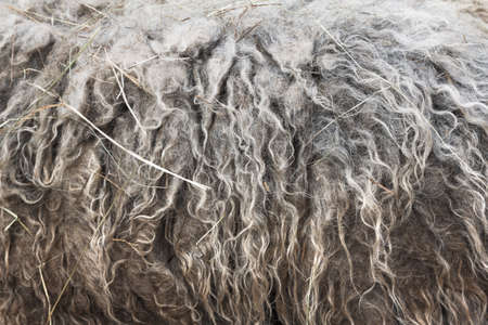 warm things: Soft, and fluffy sheepskin - wool. Closeup background