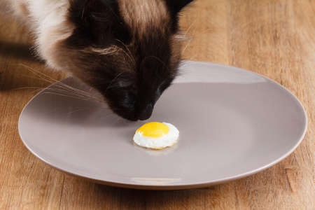 Small fried egg on a plate. Concept diet.
