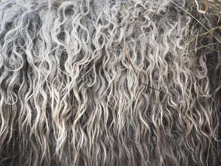 furry stuff: Soft, and fluffy sheepskin - wool. Closeup background
