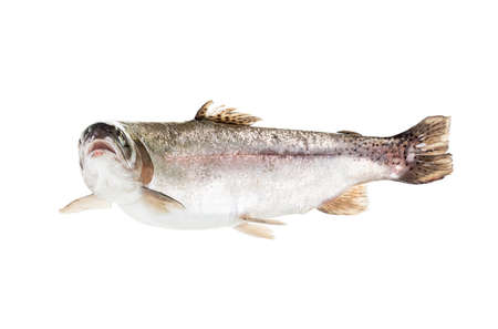 freshwater trout isolate on a white background closeup, salmon shot in a studio Stock Photo