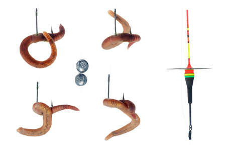 lombriz de tierra: Accesorios de pesca, anzuelo y flotador. Lombriz de tierra aislado en fondo blanco Foto de archivo