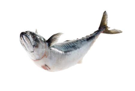 Fresh atlantic mackerel isolated on white background Standard-Bild