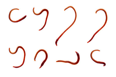 Group of earth worm isolated on white background