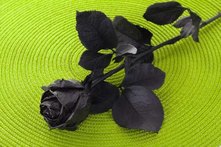Flower rose colored in black on a decorative background