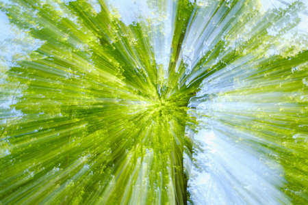 Abstract green background of tree in countryside outdoors. Zoom speed blured motion. Created by zooming out.