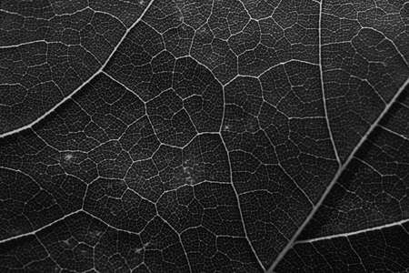 Green leaves background. Leaf abstract close up texture, black and white Stockfoto