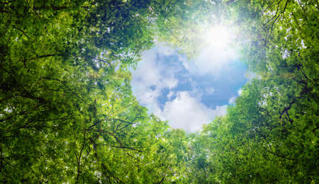Green leaves background, blue sky and heart shape cloud ecology concept idea eco love symbol background abstract Foto de archivo