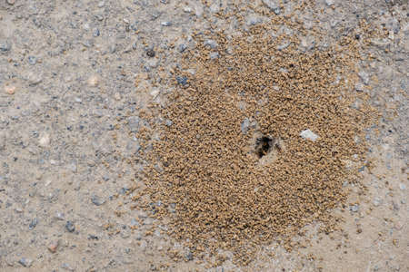 Small anthill in earth group insect nature. Stock Photo