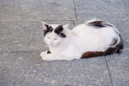 White fur cat animal pet lay on the marble pavement Reklamní fotografie