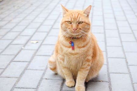 Red beautiful cat sitting on the pavement in the modern city Foto de archivo