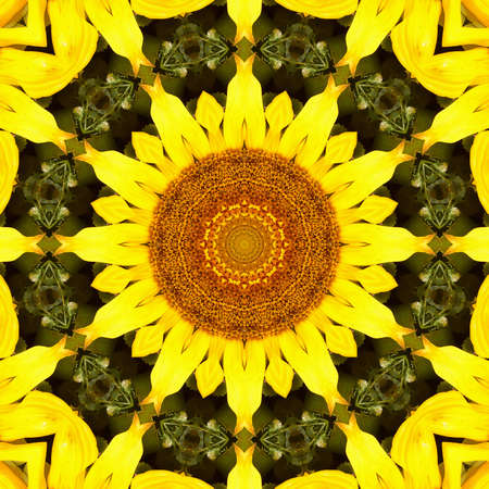 sunflower pattern background sun flower floral mandala. graphic color.