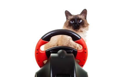 Cat driver playing game isolated on white background expression, smile casual.