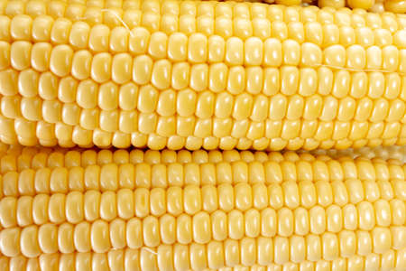 Corn vegetable Stockfoto - 119075464