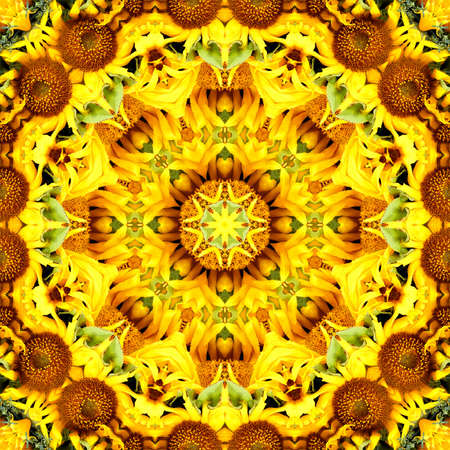 sunflower pattern background sun flower floral mandala. symmetry design.