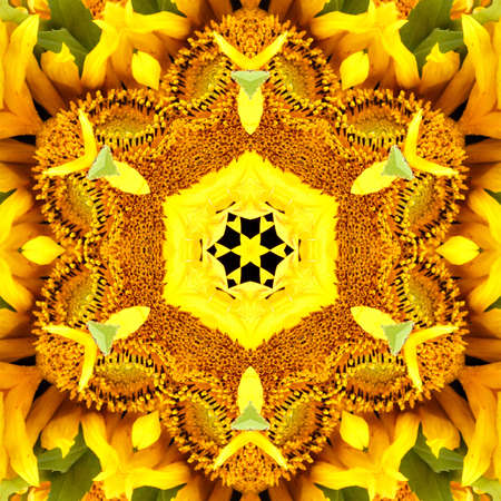 sunflower pattern background sun flower floral mandala. color.