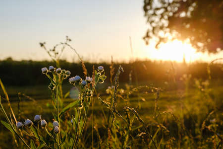 Sunrise sunset field grass meadow nature summer,  green.