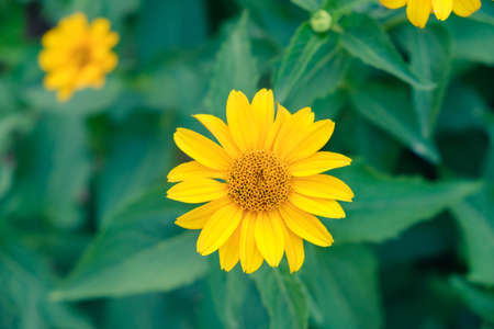 background beautiful beauty blooming blossom bright daisy. outdoor.