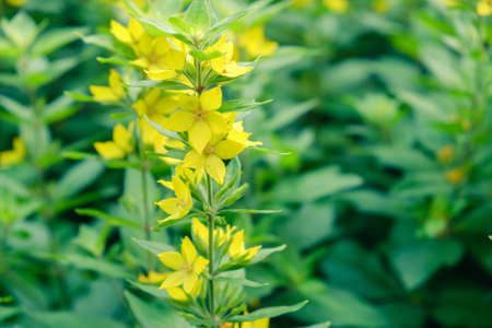 flower background yellow floral bloom beautiful spring. celebration. Stock Photo