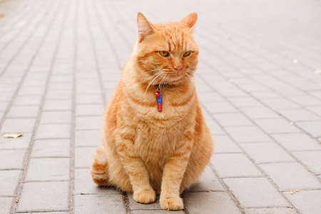 Red beautiful cat sitting on the pavement in the modern city Stock Photo