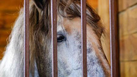 Horse stable farm ranch animal barn head, rural stall.