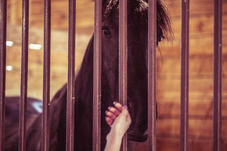 Horse stable farm ranch animal barn head, stall equine.