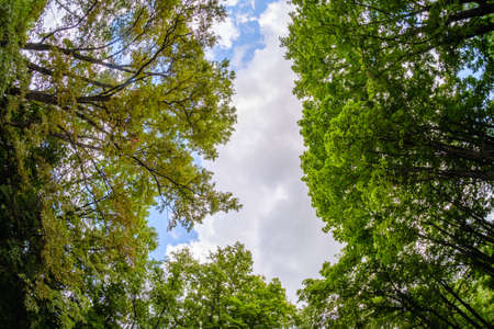 forest sky wide angle tree cloud summer, outdoor.
