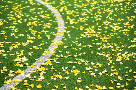 fall Autumn Soccer field with grass green, football artificial lawn. net line